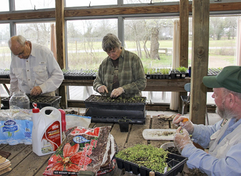 Community volunteers work to prepare plants for propagation and planting at the Armand Bayou Nature Center.