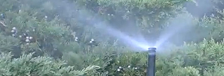 Sprinkler head watering a lawn.