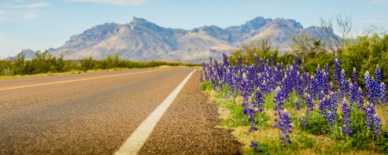 Bluebonnets along a two-lane highway with mountains in the background