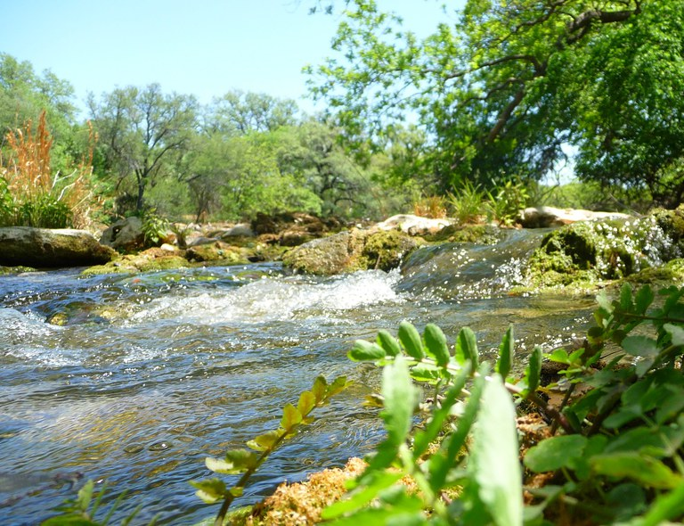 Stream with Green Foliage