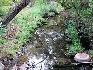 Spicewood Tributary of Shoal Creek