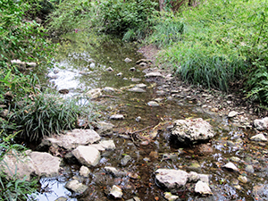 Taylor Slough in Reed Park