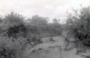 A historical photo from the 1950s of Petronila Creek after a flood Thumbnail Image