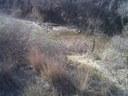 Trash in Petronila Creek